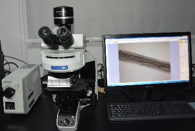 荧光显微镜OLYMPUS BX53
